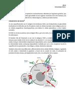Mecanismo de Accion de Los Glucocorticoides