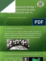 Bacterio Fag Os