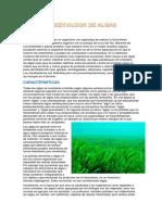 Observacion de Algas