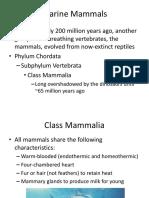 MAR111 Marine Mammals 9a