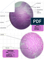 Desarrollo Embriologico de La Glandula Tiroides