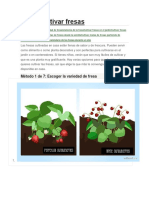 Cómo Cultivar Fresas