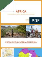 Producción Caprina en África
