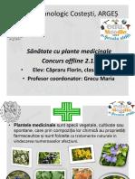 Sanatate Cu Plante Medicinale