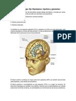 Neuroendocrinologia Eje Hipotalamico-hipofisiario (Tema 3)