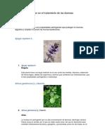 Plantas Que Se Usan en El Tratamiento de Las Diarreas