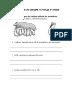 (OA3) ETAPAS DEL CICLO DE VIDA DE UN MAMIFERO 2° BASICO