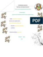 Informe Analisis de Alimentos Nº 02 1