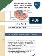 Presentacion La Celula Morfofisiologia