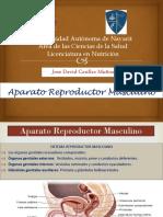 Presentacion Aparatos Reproductores Morfofisiologia