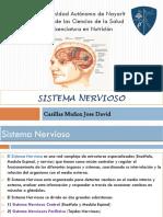 Presentacion Sistema Nervioso Morfofisiologia
