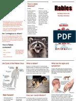 rabies disease briefing