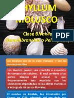 MOLUSCOS-Pelecipodo