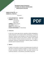 Practica Protozoarios