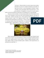 Caracterizarea Botanica a Orhideelor-Anda Carstoiu