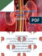 Anatomia y Funcion Renal
