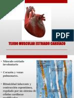 7. Tejido Muscular Cardíaco y Liso