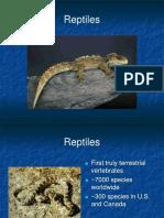 319 Reptiles