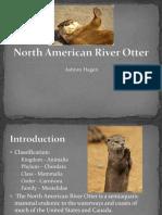 north american river otter presentation
