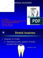dental anatomy 1.ppt