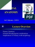 Dental Anatomy2
