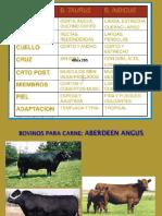 razas de carne bos tauros 5.ppt