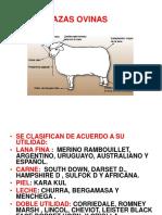 razas ovinas y caprinas 7.ppt