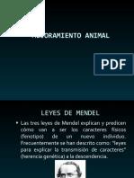 Mejoramiento Animal 1