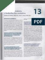 Capítulo 13 [Harper] - Cadena Respiratoria y Fosforilación Oxidativa