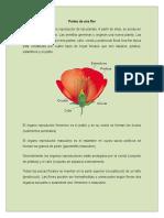 Partes Deun a Flor