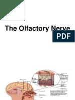 Nervi Cranieni 1 (1)