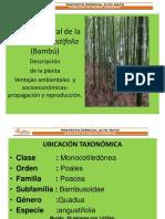 Presentación bambu.pptx