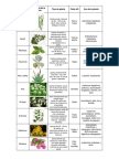 cuadro plantas med.docx