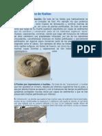 Principales Tipos de Fósiles