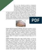Pseudallescheria-boydii (1)