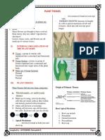 Plant-Tissue.docx