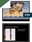 FLORESDEBACH.pdf