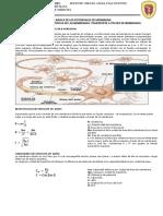 Biofisica Clase 12 2017 II Bioelectricidad Potencial de Accion Doc7 2