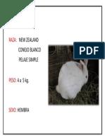 Conejo New Zeland