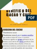 Beneficio Cacao 2 Clase Cosecha Del Cacao