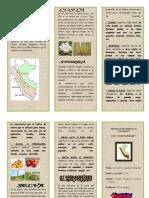 Triptico Las Cuatro Regiones Del Peru