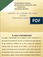 Control de La Gota Del Cacao