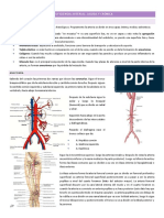 3. Insuficiencia Arterial