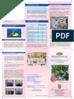 Aplicación de Tecnolologías Agroindustriales Para El Tratamiento Del Guayaba Con Fines de Expo
