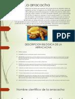 La Arracacha Diapositiva