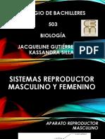 Sistemas Reproductor Masculino y Femenino