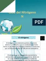 Ciclo Del Nitrogeno 1