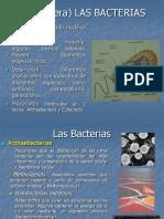 11- Las Bacterias 2014