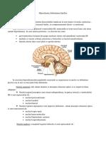 Hipotalamus.pdf