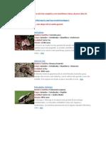 Animales en Extinsión Bolivia 2 - Extendido